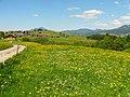 Blumenwiese bei Obermaiselstein06.jpg