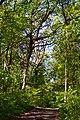 Boholiuby Lutskyi Volynska-Pershotravnevyi park-alley-1.jpg