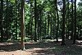 Bois du Pottelberg - Pottelbergbos 03.jpg