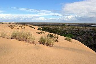 Bosque debajo de las dunas de Doñana.jpg