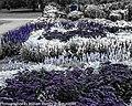 Botanic Gardens Glasnevin (9922603864).jpg