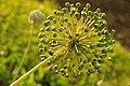 Botanic garden (7462787916).jpg