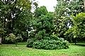 Botanic garden limbe35.jpg