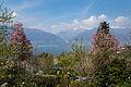 Botanical Garden Vivaio Eisenhut.jpg