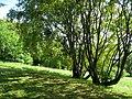 Botanischer Garten der Universität Würzburg - IMG 6864.JPG