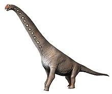 brachiosaurus wikipedia