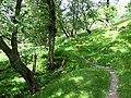 Bridleway, Cwm Doethie, Ceredigion - geograph.org.uk - 512029.jpg