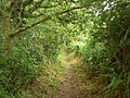 Bridleway to Haddon Wood - geograph.org.uk - 892407.jpg