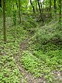 Brno, Wilsonův les (4).JPG