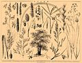 Brockhaus and Efron Encyclopedic Dictionary b24 602-0.jpg