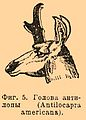 Brockhaus and Efron Encyclopedic Dictionary b52 878-5.jpg