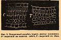 Brockhaus and Efron Encyclopedic Dictionary b81 177-0.jpg