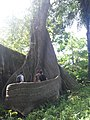 Bunce Island tree.jpg