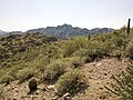 Butcher Jones Trail - Mt. Pinter Loop Trail, Saguaro Lake - panoramio (157).jpg