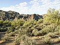 Butcher Jones Trail - Mt. Pinter Loop Trail, Saguaro Lake - panoramio (55).jpg