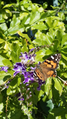 Butterfly with Duranta erecta.png