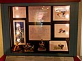 CN Animation Exhibit at Houston Health Museum - 4652443509.jpg