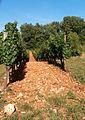 Cahors 2011 08 028.jpg