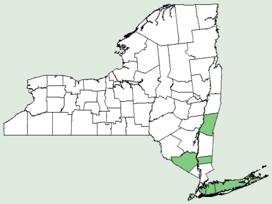 Callitriche stagnalis NY-dist-map.png