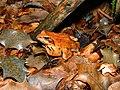 Camouflage (948298843).jpg