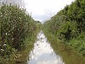 Canal des Sol de s'Albufera 01.jpg