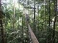 Canopy Walkway- Taman Negara - panoramio.jpg
