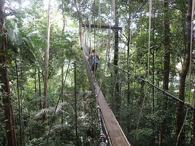 File:Canopy Walkway- Taman Negara - panoramio.jpg
