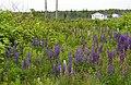 Cape Breton Island (6617704219).jpg