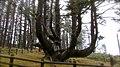 Cape Meares (8237566899).jpg