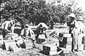 Carlingford-Epping NSW-apricot orchard packing Mobbs farm c.1915.jpg