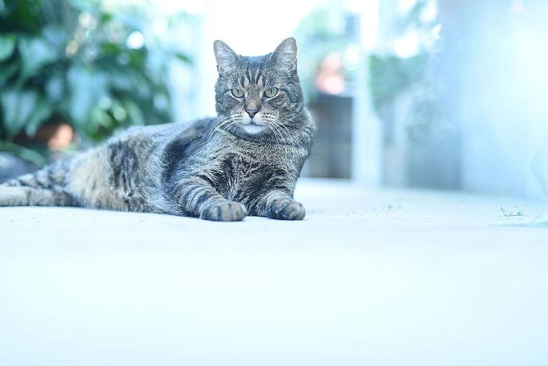 Cat III.JPG