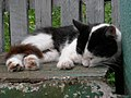Cat rests on the bench (34433313492).jpg