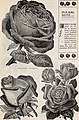 Catalogue - useful greenhouse and bedding plants (1902) (20538896556).jpg