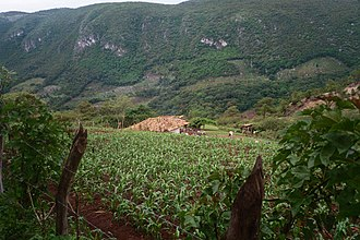 Celaque National Park - A family farm located in Celaque's borders