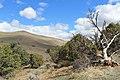 Centennial Park - panoramio (16).jpg