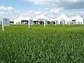 Cereals 2008, Spring Barley Plots - geograph.org.uk - 841202.jpg