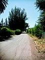 Cervera, Buin, Chile - panoramio (1).jpg