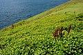 Chaojing Coast 潮境海岸 - panoramio.jpg