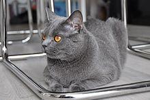 Noir TS chatte