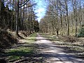 Chawton Park Woods - geograph.org.uk - 148392.jpg