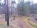 Cherkas'kyi district, Cherkas'ka oblast, Ukraine - panoramio (63).jpg