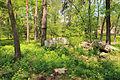 Cherkasy Sosnivka Park 03.JPG