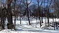 Cimetiere Elm - panoramio.jpg