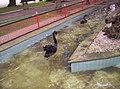 Cisnes Parque Rosalía de Castro, Lugo 1.jpg