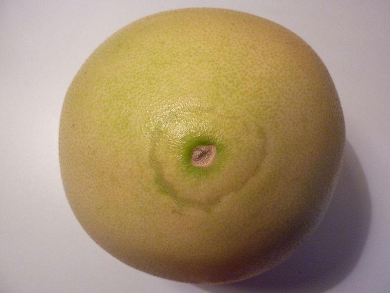File:Citrus maxima 'Honey'- top.JPG