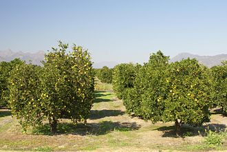 Climate of south-west England - Rising temperatures could lead to citrus cultivation