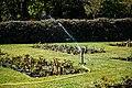 City of London Cemetery Memorial Garden sprinkler 9.jpg