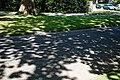 City of London Cemetery roadside lawn dappled shade 1.jpg