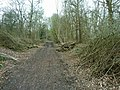 Clearance on the Downs Link - geograph.org.uk - 2335012.jpg