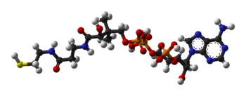 Coenzyme-A-3D-balls.png